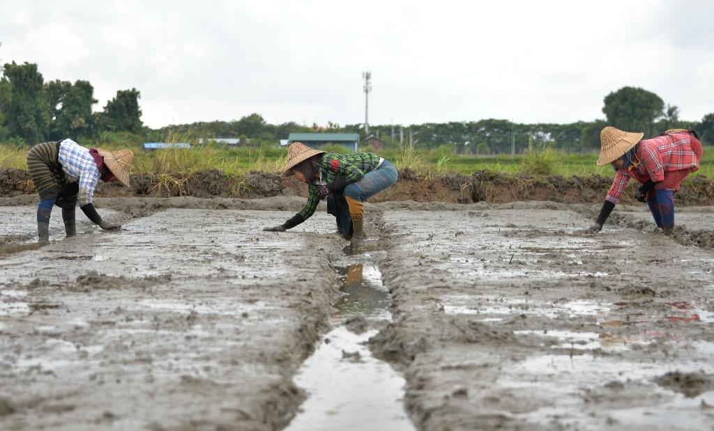 The way some irrigated rice paddies are managed worldwide, with cycles of flooding followed by dry periods, may lead to twice the planet-warming greenhouse gas pollution as previously thought, researchers said Monday.  Since rice is a major staple for at least half the world's seven billion people, the way it is managed has significant effects on the Earth's warming climate, said the report in the Proceedings of the National Academy of Sciences, a peer-reviewed US journal.  For the study, researchers at the non-profit Environmental Defense Fund took a closer look at emissions of nitrous oxide, a long-lasting atmospheric pollutant that is more potent than methane or carbon dioxide.
