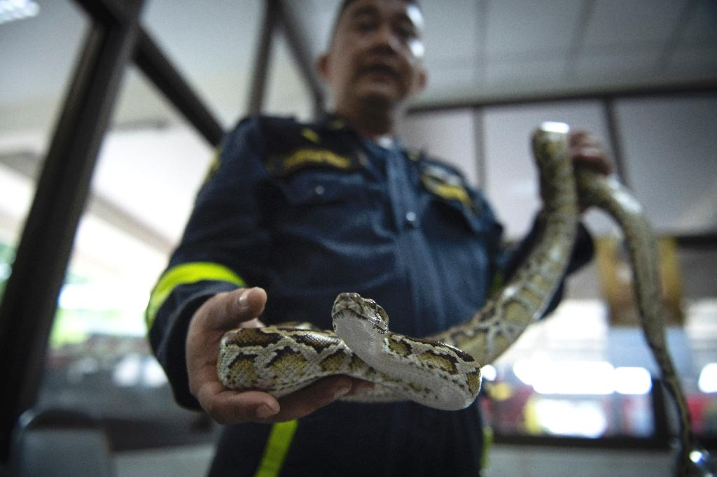 A fire department in northern Bangkok has not received a call for a fire since June.  'The work (catching snakes) is quite a lot,' said Suraphong Suepchai, a 46-year-old firefighter working in the Thai capital's Lat Yao district.  Snakes are a common sight in Bangkok, a bustling city built on once swampy land, and it is not unusual to see them slithering across public spaces like parks, water canals and schools.