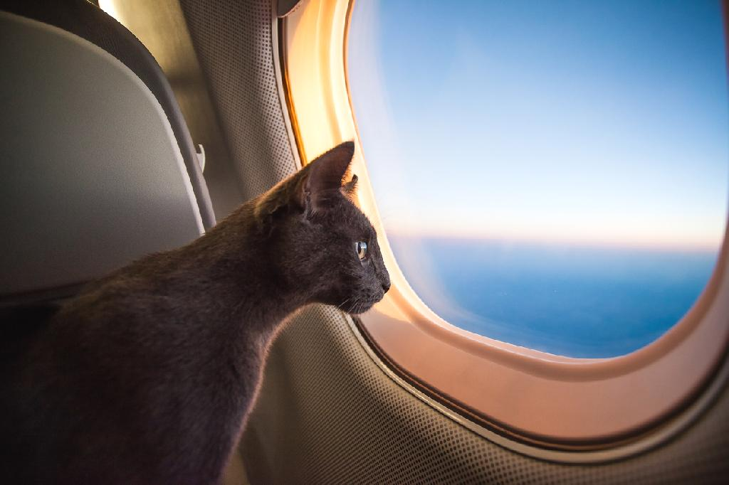 When it comes to air travel in the US, 2018 was a good year with fewer people getting bumped from their flight and fewer onboard animal-related incidents. On the other hand, the rate of baggage mishandling and tarmac delays increased last year.