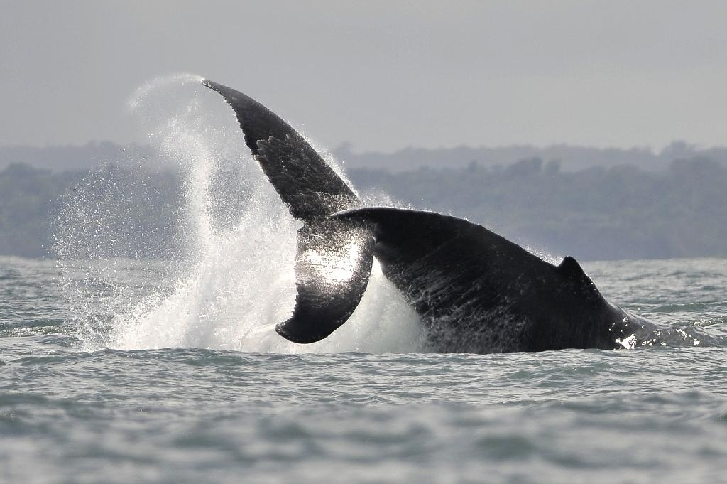 Climate change is set to empty the ocean of nearly a fifth of all living creatures, measured by mass, by the end of the century, researchers have calculated.  In a world that heats up three to four degrees Celsius compared to pre-industrial levels, 17 percent of marine biomass -- from minuscule plankton to 100-tonne whales -- will be wiped out, they reported in the US Proceedings of the National Academy of Science.  Bigger fish and marine mammals already devastated by overfishing, pollution and ship strikes will see especially sharp declines due to rising temperatures.