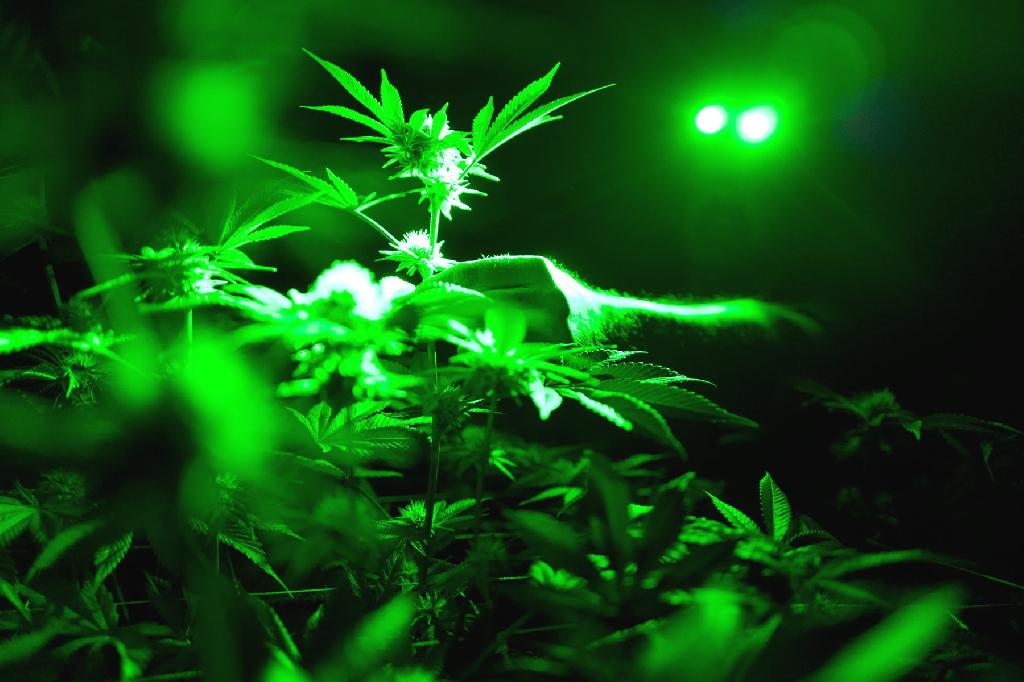 Some 2,500 years ago, in present-day China, people used cannabis to get high during rituals, scientists announced in a new study published Wednesday.