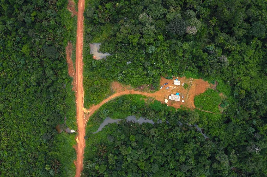 A rainforest area the size of Spain will have been destroyed by firms growing consumer staples like palm oil in the decade to 2020 -- industry's self-imposed deadline to end deforestation, Greenpeace said Tuesday.  Some of the world's largest consumer brands -- including Nestle and Unilever -- had pledged in 2010 to reach net zero deforestation within a decade through 'responsible sourcing' of cattle, palm oil, soya and other commodities.  'These companies are destroying our children's future by driving us towards climate and ecological collapse,' said Anna Jones, global project lead for forests at Greenpeace UK.
