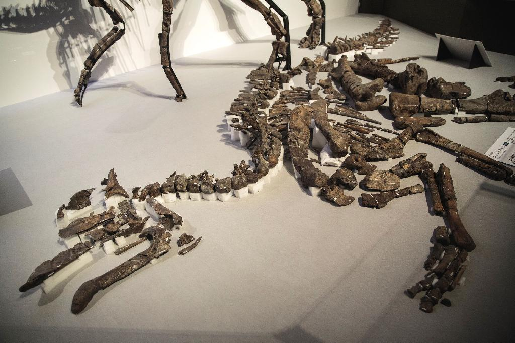 Japanese scientists have identified a new species of dinosaur from a nearly complete skeleton that was the largest ever discovered in the country, measuring eight metres (26 feet) long.  After analysing hundreds of bones dating back 72 million years, the team led by Hokkaido University concluded the skeleton once belonged to a new species of hadrosaurid dinosaur, a herbivorous beast that roamed the Earth in the late Cretaceous period.  A partial tail was first found in northern Japan in 2013 and later excavations revealed the entire skeleton.