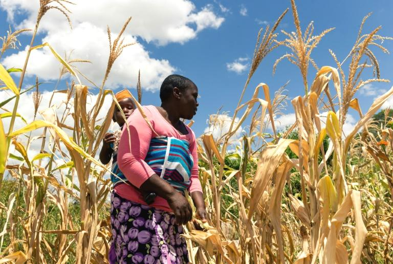 Zimbabwe is facing 'man-made' starvation with 60 percent of the people failing to meet basic food needs, a UN special envoy said Thursday after touring the southern African country.  Hilal Elver, Special Rapporteur on the right to food, ranked Zimbabwe among the four top countries facing severe food shortages outside nations in conflict zones.  'The people of Zimbabwe are slowly getting to a point of suffering a man-made starvation,' she told a news conference in Harare, adding that eight million people would be affected by the end of the year.