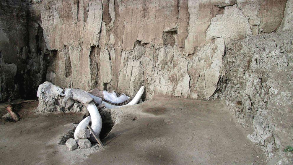 Anthropologists in Mexico say they've uncovered more than 800 bones from 14 mammoths, in two human-made traps north of Mexico City, which are thought to be 15,000 years old.  The pits -- which are 6 feet deep and 25 yards in diameter -- were discovered when the site was excavated to be used as a garbage dump, according to a statement from Mexico's National Institute of Anthropology and History.  Researchers think that groups of 20 or 30 prehistoric hunters herded the mammoths with torches and branches, attempting to separate one animal from the group and lead it into a trap.