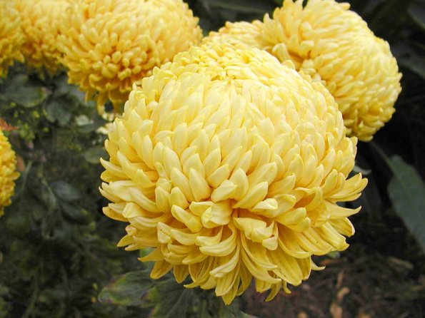 photo_big_yellow-flower-3.jpg